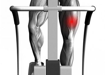 las-proteinas-en-el-desarrollo-de-los-musculos