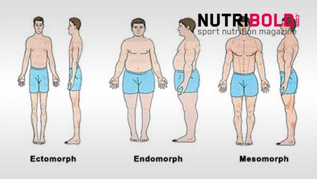 Dieta, Entrenamiento y Suplementación para Endomorfos