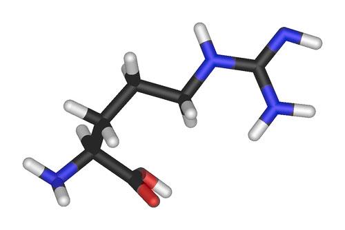 Los suplementos de L-Arginina no aumentan el flujo sanguíneo en personas normales