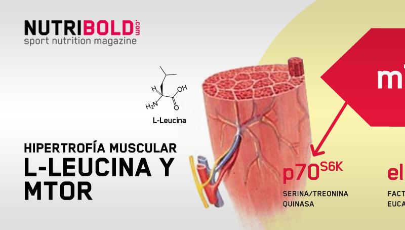 L-leucina-e-hipertrofia-muscular