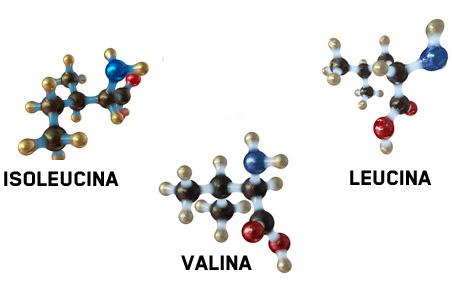 """Estructura """"ramificada"""" de los aminoácidos Isoleucina, Valina y Leucina"""